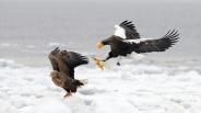 hunting_prey